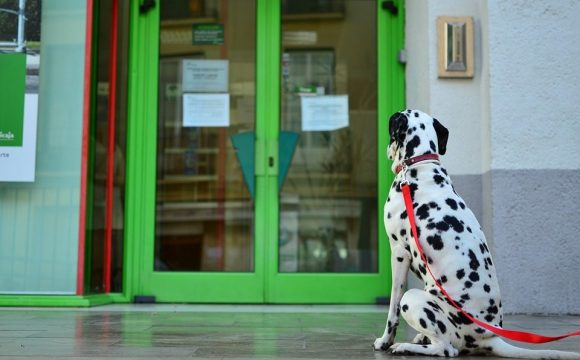 The Best Glass Door for Dogs - Post Thumbnail